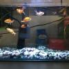 中川様金魚1